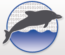 Dolphin Bytes Website
